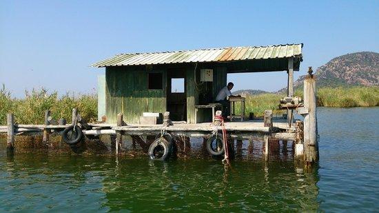 Dalyan Nehri : Чувак