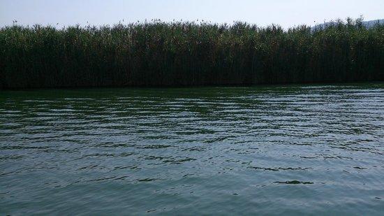 Dalyan Nehri : 1