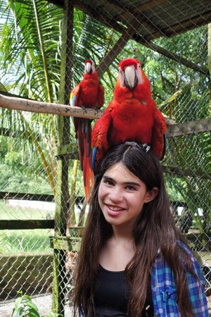 Bodden Tours: Scarlet Macaw