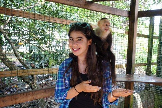 Bodden Tours: Monkey business