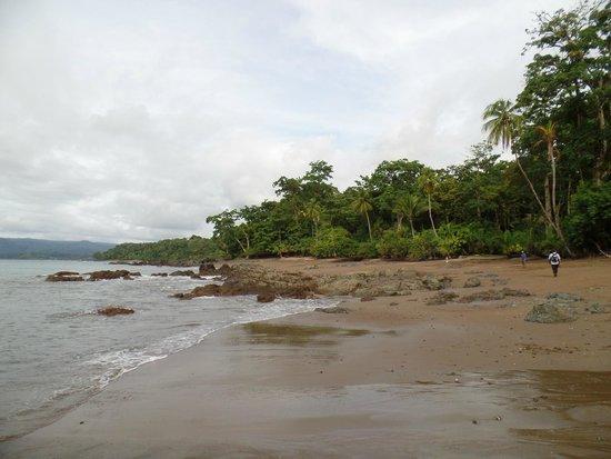 Copa de Arbol Beach and Rainforest Resort: The Beach
