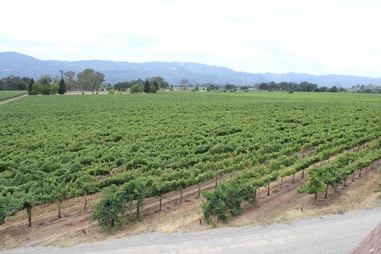 Mumm Napa: The vineyards
