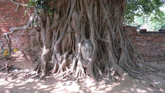 Wat Mahathat : testa di Buddha