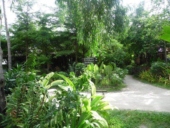 Chaweng Garden Beach Resort: Chaweng Gardens