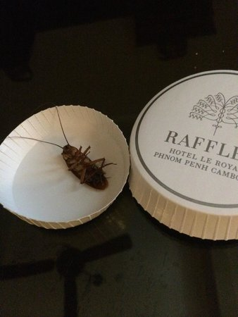 Raffles Hotel Le Royal: cockroach in the Suite