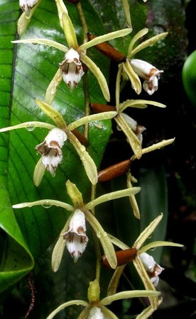 Lupa Masa Rainforest Camp: A beatiful orchid by the river