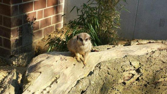 Dortmund Zoo : Wie es guckt :)