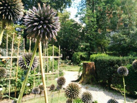 Orto botanico brera foto di orto botanico di brera milano