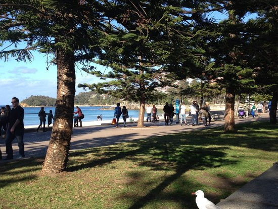Easy walk to Shelly Beach from Manly Beach