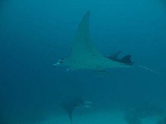 Maml Divers Palau&Peleliu