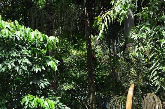 Nayara Hotel, Spa & Gardens: Forest