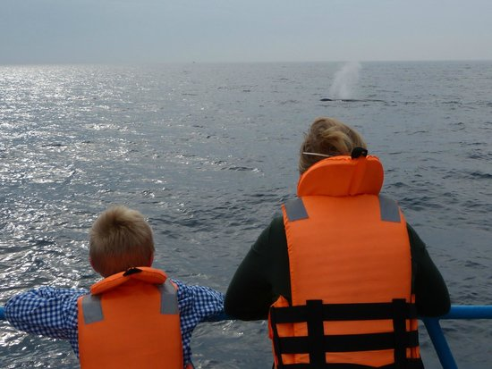 Whale Watching Mirissa with Geeth: distance good for whale