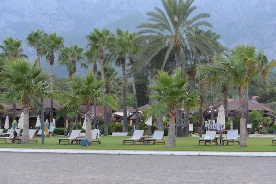 Club Med Palmiye : Beautiful palm trees