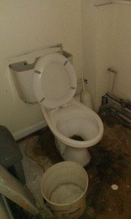 Mary Rose Inn: toilet!