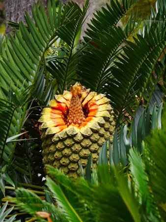 ARTS IN Hotel Conde Carvalhal: cycad in the bot garden