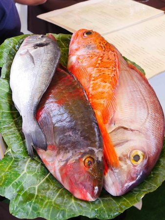 ARTS IN Hotel Conde Carvalhal: O Jango, bream, dorade, scabbard, parrot fish