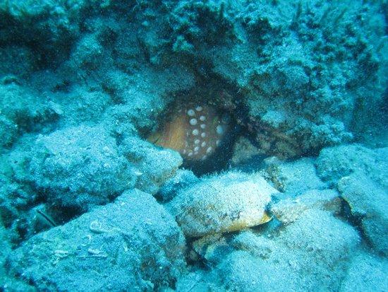Ethos Dalyan Dive: Onderwaterleven