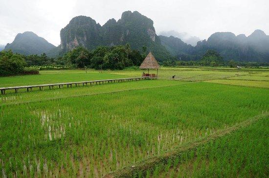 Vieng Tara Villa : Amazing padi field