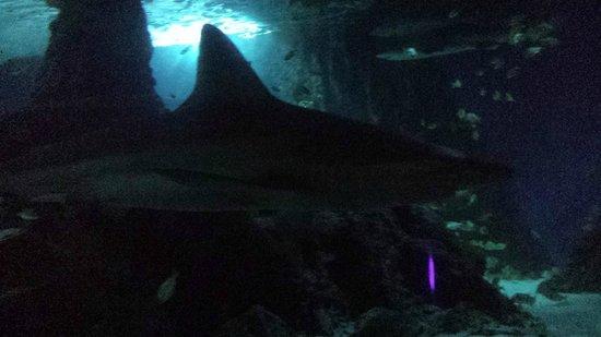 Marineland : Aquarium Tunnle