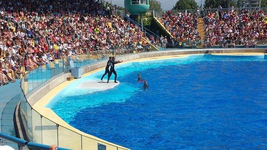 Marineland : Dolphins Show