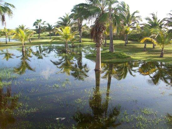 Blau Marina Varadero Resort: Laguna artificial de agua residual de la piscina.