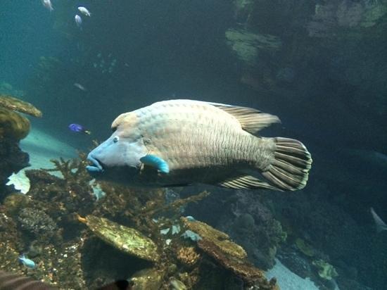 National Aquarium, Baltimore : soo close