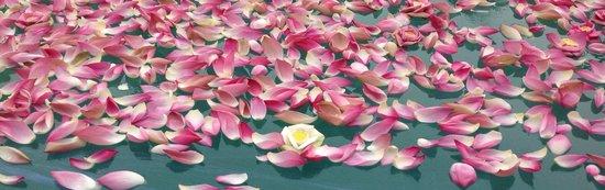 Shinta Mani Resort: Pool of Lotus Flowers