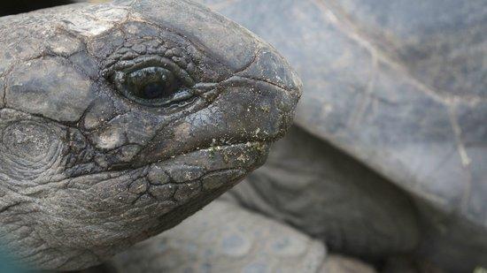 Constance Ephelia: Giant turtois