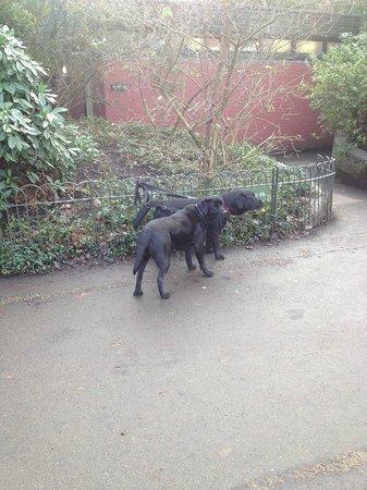 Kensington Gardens: Собачки в садах