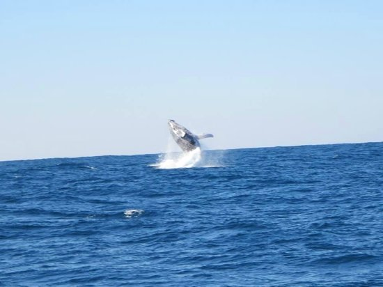 Martys at Little Beach: Whale watching package at Marty's