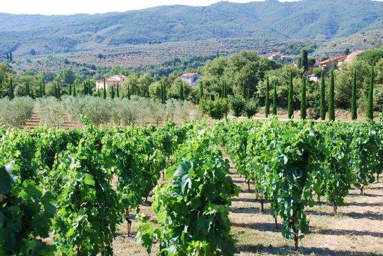 Casa Portagioia: Vineyards of Portagioia