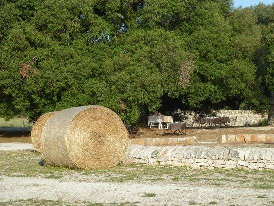 Masseria Iazzo Scagno : petit dejeuner sous les arbres