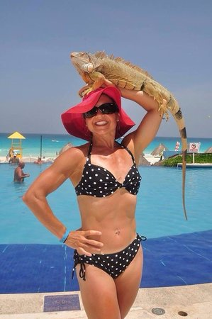 Golden Parnassus All Inclusive Resort & Spa Cancun: Pool activities and tamed animal pictures