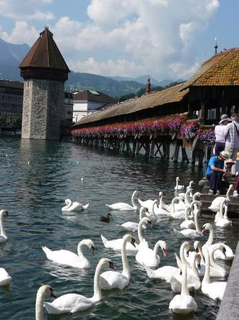 Chapel Bridge (Kapellbrucke): the bridge and swans