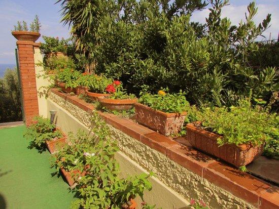 Restaurant Picture Of Hotel Villa Pina Massa Lubrense