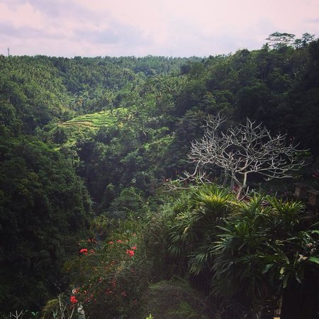 Rijasa Agung  - Bali Ubud Luxury Hotel Resort Villa: The view from my room - priceless