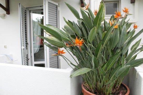 Hotel Villa Janto: Zimmer auf Garten-/Poolseite