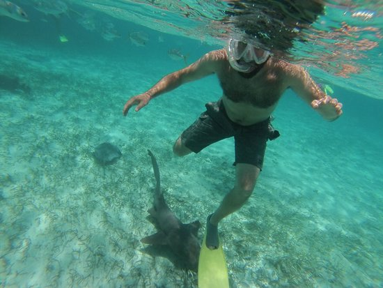Caveman Snorkeling Tours: snorkeling with a shark