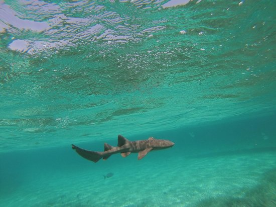 Caveman Snorkeling Tours: shark swimming
