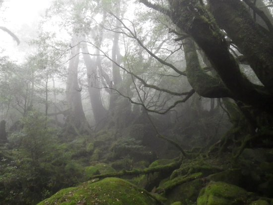 Shiratani Unsuikyo Valley: 森