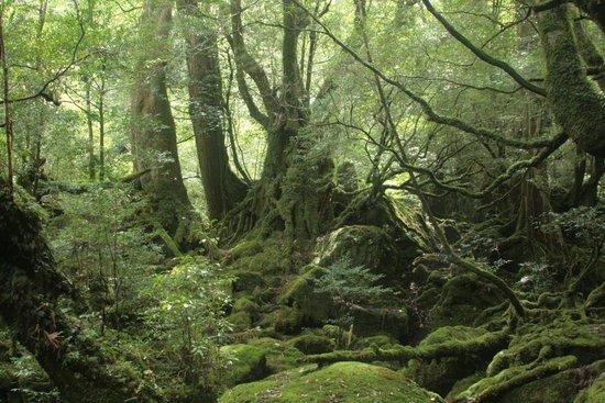 Shiratani Unsuikyo Valley: もののけ姫の森3
