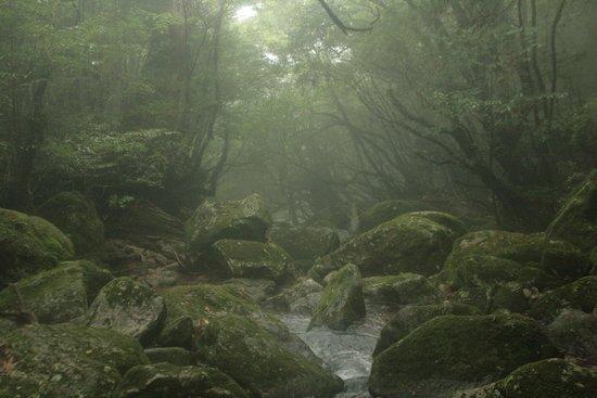 Shiratani Unsuikyo Valley: 森4