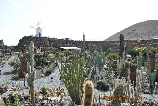 Jardín de Cactus: widok na ogród