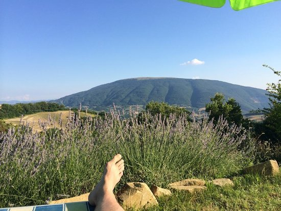Le Ginestre Bed and Breakfast Assisi: Sitting at the side of the pool enjoying the view
