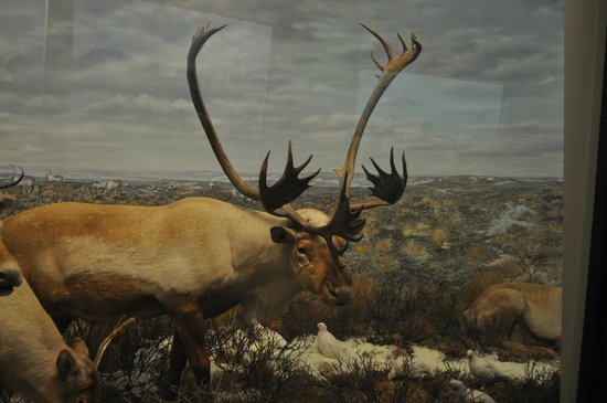 Denver Museum of Nature & Science: Stag