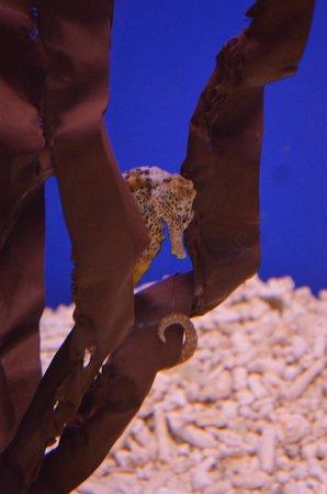 SEA LIFE Blankenberge: sea life