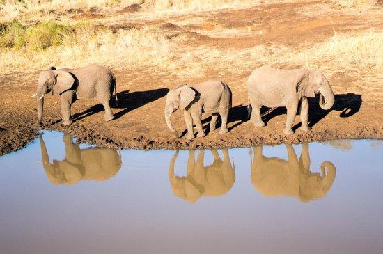 Zulu Nyala Heritage Safari Lodge: elephants