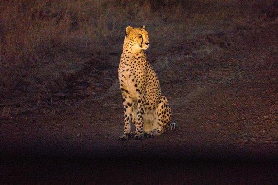 Zulu Nyala Heritage Safari Lodge: cheetah