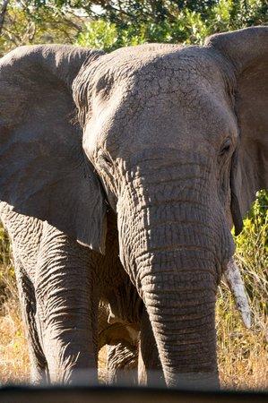 Zulu Nyala Heritage Safari Lodge: elephant