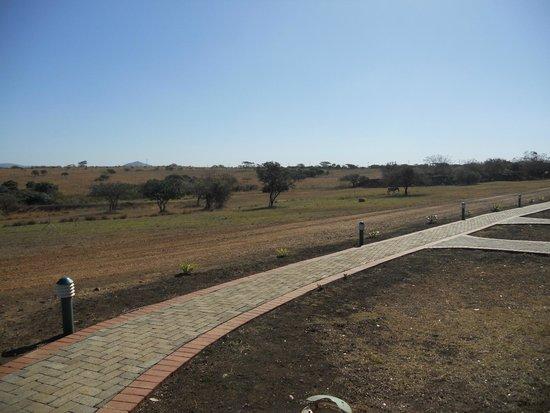 Zulu Nyala Heritage Safari Lodge: view